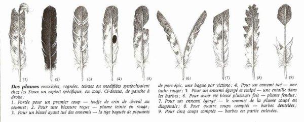 Les plumes les lakotas - Signification des plumes d oiseaux ...